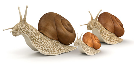Family Snails (clipping path included)