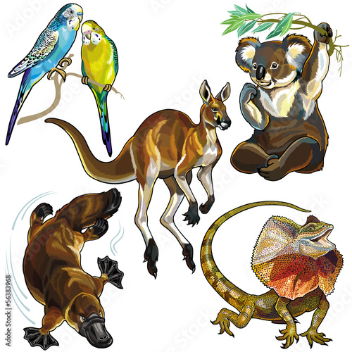 set with wild animals of australia
