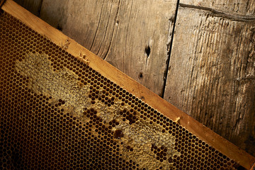 honeycomb on frame with fresh honey