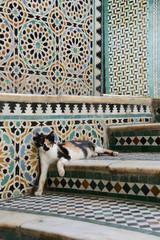 cat - maroc