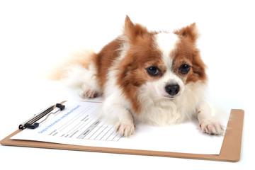 Pet medicine form