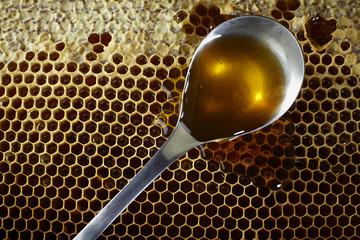 spoon full of honey on honeycomb