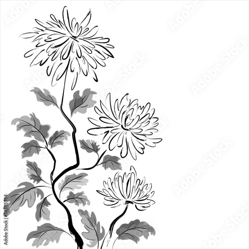 Chinese chrysanthemum. Ink painting