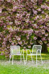 stühle unterm kirschbaum