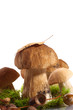 forest cep