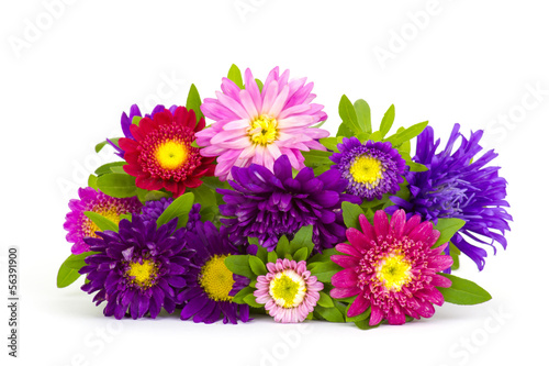 Bouquet of colorful asters flowers on white background