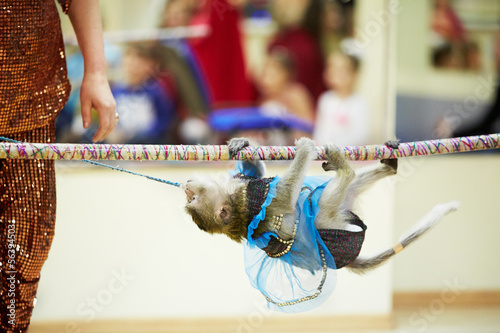 Little monkey climbs on rope upside down