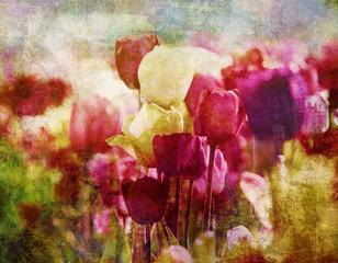 tulpen nostalgisch