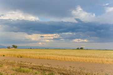 Storm Clouds Gathering above a Field of Wheat
