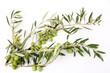 Rami di ulivo e olive