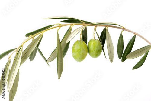 Ramo di ulivo curvato e due olive verdi