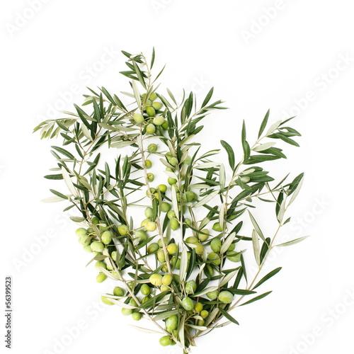 Rami di ulivo a forma di albero