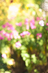 Defocused flower garden