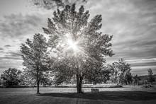 Paysage avec le soleil brille si les arbres