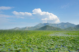 Montenegro: Lake Skadar National Park