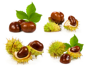 collection of chestnuts