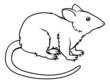 Stylised rat illustration
