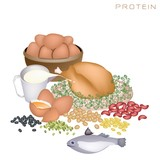Health and Nutrition Benefits of Protein Foods