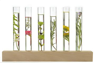 Décoction de plantes et fleurs médicinales