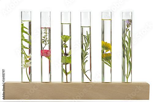 Foto op Plexiglas Lavendel Décoction de plantes et fleurs médicinales