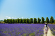 Walk in Lavender garden