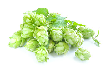 Small group of cones of hop with sheets (Humulus lupulus) on a w