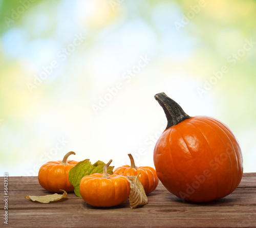 Pumpkins and squashs on wooden boards