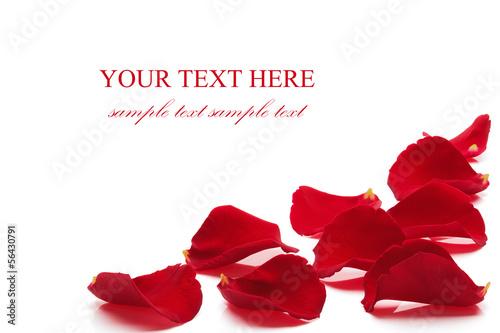 canvas print picture Rose petals.