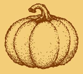 Vector pumpkin vegetable fruit. Monochrome sketch