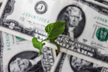 sprout sprouting out of the money
