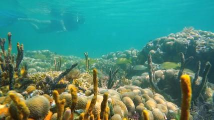 Snorkel in a coral garden tropical fish