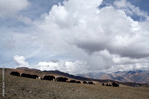 Mountain landscape and herd of yaks in the Nepal Himalaya