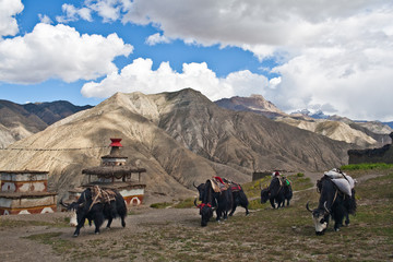 Mountain landscape and caravan of yaks in Dolpo, Nepal
