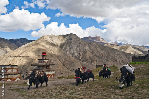 Fotobehang Nepal Mountain landscape and caravan of yaks in Dolpo, Nepal