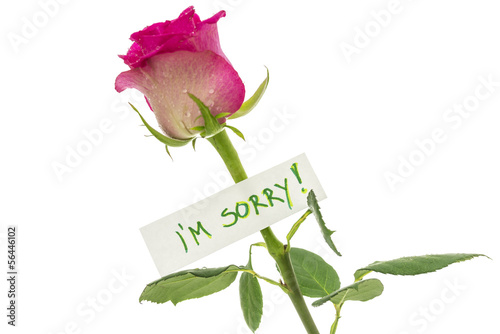 I am sorry note