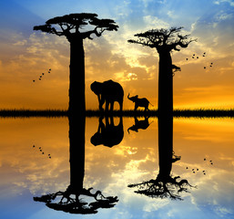 Baobab and elephant at sunset