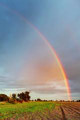 Rainbow on field - vertical