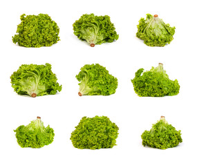 set of Fresh Green Lettuce isolated on white