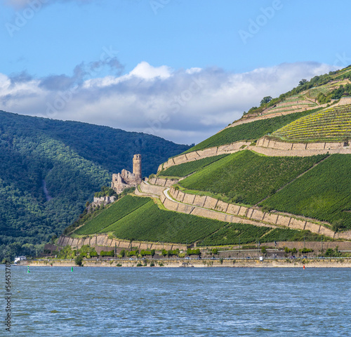 Ehrenfels castle in the vineyards of the Rhine valley