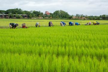farmer activity