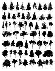 Set silhouette tree