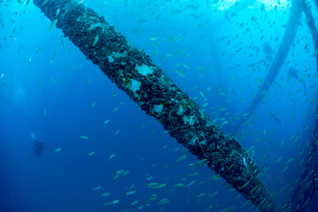 School of fish underwater near oil rig