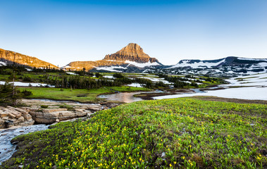 Wildflower field at Logan Pass, Glacier National Park, MT