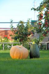 Pumpkins in garden over apple trees