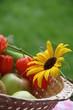 Körbchen mit Äpfeln, Sonnenblume und Lampionblume