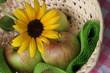 Äpfel mit Blüte einer Sonnenblume im Körbchen