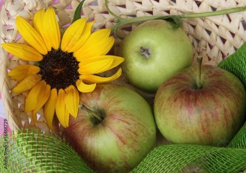 Äpfel mit Sonnenblume im Körbchen