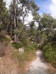 calanques - sentier provençal