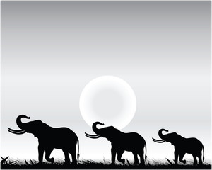 Black silhouettes of elephants and sunset, vector