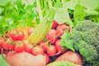 Vegetables retro looking
